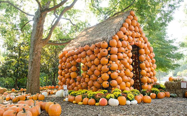 Celebrate Autumn Season At Cheekwood Harvest